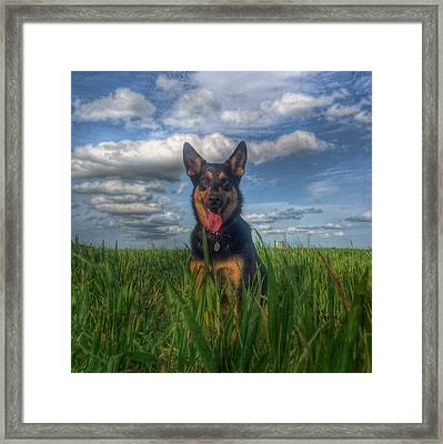 Mr Darcy Squared Framed Print by Isabella F Abbie Shores FRSA