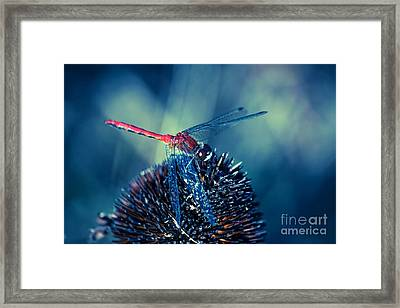 Mr Dragonfly On Stage Framed Print by Aimelle
