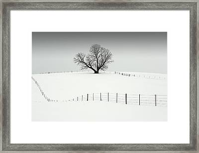 Mr. Elder Tree Framed Print by Todd Klassy
