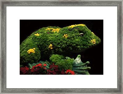 Mr Frog Framed Print