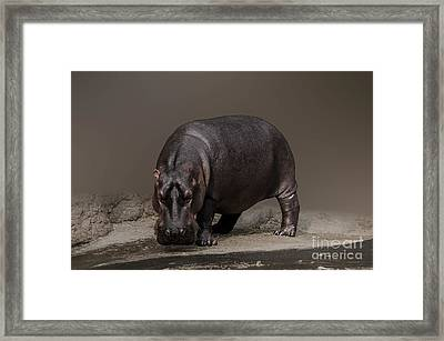 Mr. Hippo Framed Print