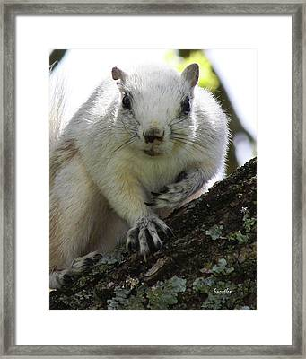 Mr. Inquisitive I  Framed Print by Betsy Knapp