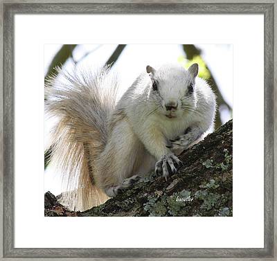 Mr. Inquisitive II Framed Print by Betsy C Knapp