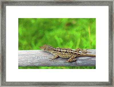 Mr. Lizard Framed Print