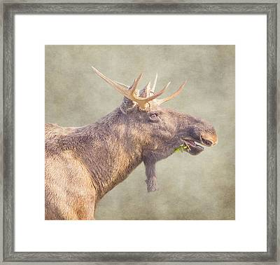 Mr Moose Framed Print by Roy McPeak
