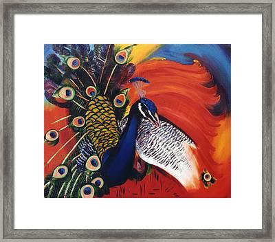 Mr Peacock Framed Print by Lisa Boyd