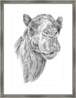 Mr Rak Camel Framed Print