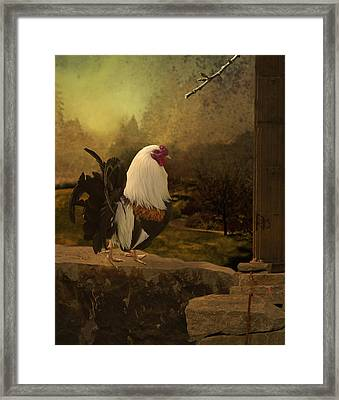 Mr Rooster Framed Print by Jeff Burgess