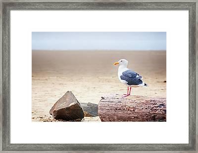 Mr. Seagull Framed Print
