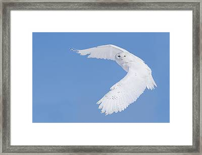 Mr Snowy Owl Framed Print