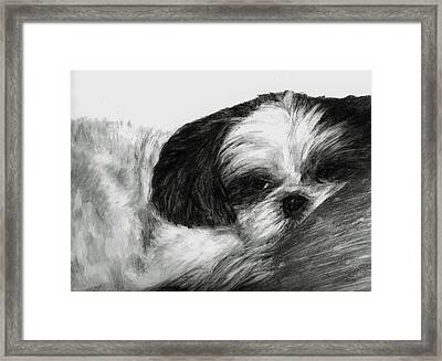 Framed Print featuring the drawing Mr Tibbs by Meagan  Visser
