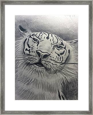Mr Tiger Framed Print by John DiMare