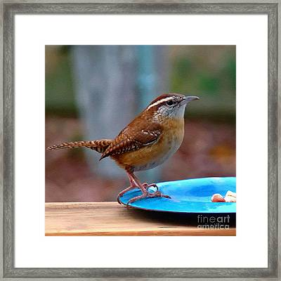 Mr Wren Framed Print by Sue Melvin