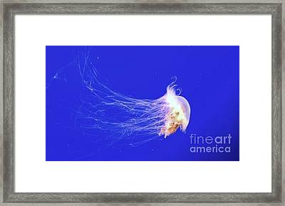 Mr.jelly Framed Print