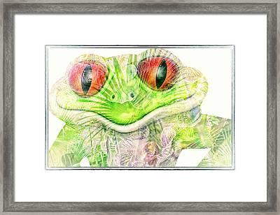Mr Ribbit Framed Print by Pamela Williams
