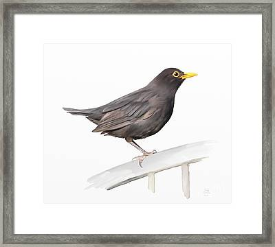 Ms. Blackbird Is Brown Framed Print