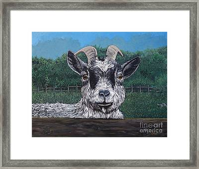 Ms Frisky  Framed Print