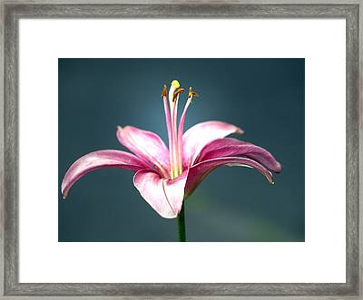 Ms. Lily Framed Print by Kim