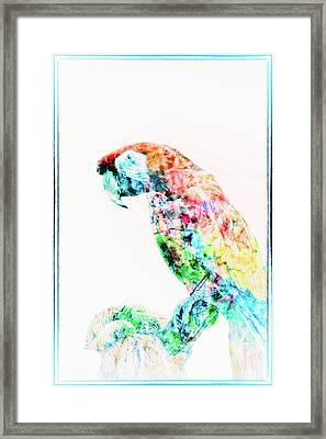 Ms Molly Framed Print by Pamela Williams