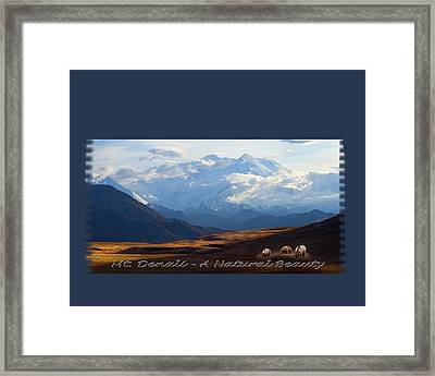 Mt. Denali National Park Framed Print