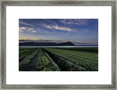 Dawn And Fog Over The Farmland Framed Print