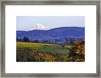 Mt. Hood From A Dundee Hills Vineyard Framed Print