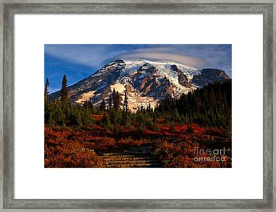 Mt. Rainier Paradise Morning Framed Print by Adam Jewell