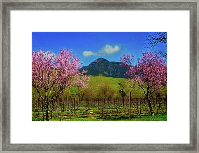 Mt St Helena Framed Print