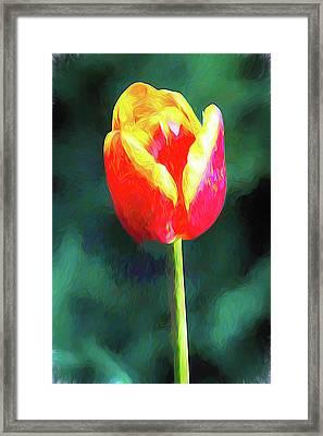 Mt Vernon Tulip Framed Print