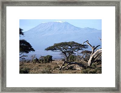 Mt.kilimanjaro Framed Print by Wade Worsley