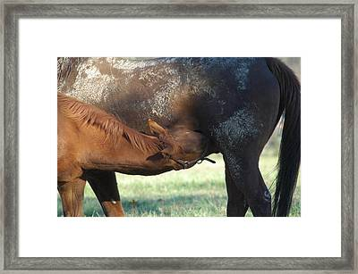 Muddy Mommy Framed Print by William A Lopez