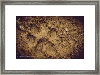 Muddy Pup Framed Print by Stefanie Silva