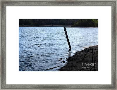 Muddy Shore Framed Print by Amy Wilkinson