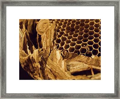 Mudwasp Nest 4 Framed Print by Anna Villarreal Garbis