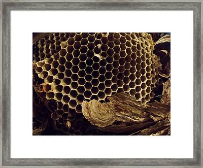 Mudwasp Nest 5 Framed Print by Anna Villarreal Garbis