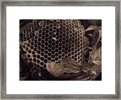 Mudwasp Nest 6 Framed Print