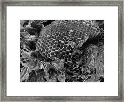 Mudwasp Nest 9 Framed Print by Anna Villarreal Garbis