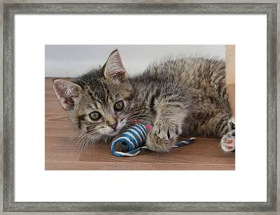 Framed Print featuring the photograph Muffin by Doris Potter