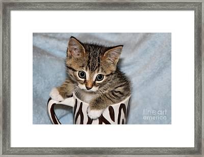 Mug Kitten Framed Print by Teresa Zieba