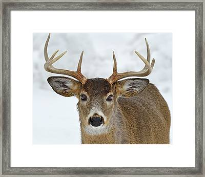 Framed Print featuring the photograph Mug Shot by Tony Beck