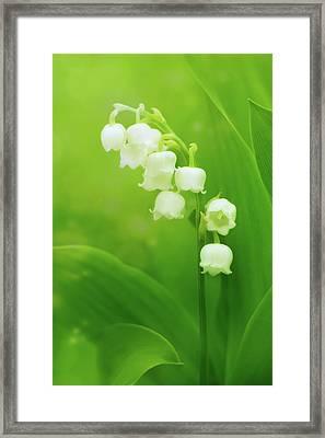 Muguet Melody Framed Print