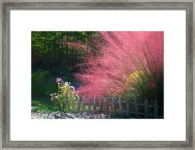 Framed Print featuring the photograph Muhly Grass by Kathryn Meyer