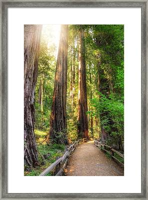 Muir Woods Forest Path And Redwood Trees Framed Print