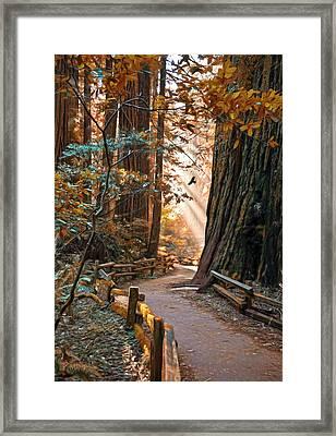 Muir Woods In Fall Framed Print