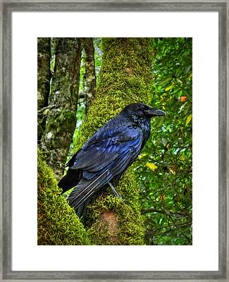 Muir Woods Raven 001 Framed Print by Lance Vaughn