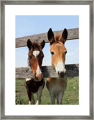 Mule And His Painted Friend Framed Print