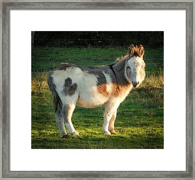 Mule In The Sun Framed Print