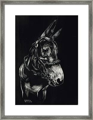 Mule Polly In Black And White Framed Print