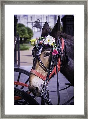 Mule Portrait Framed Print