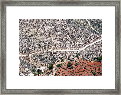 Mule Train On Grand Canyon Bottom Framed Print by Jeanette Oberholtzer